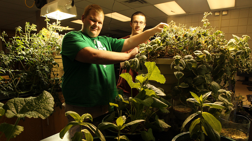 Students grow plants in a lab.