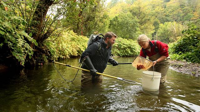 A professor studies fish in a stream to help the community.